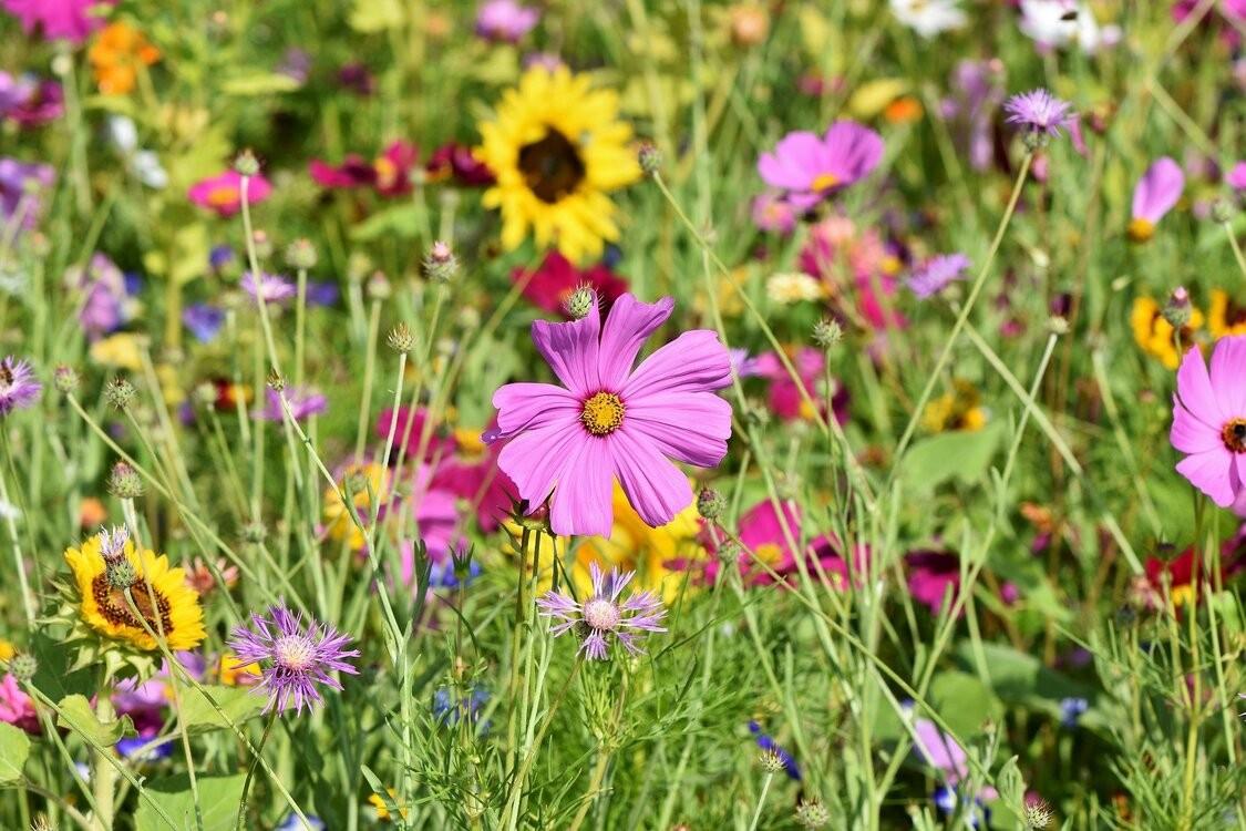 flower-meadow-3598561_1920-1