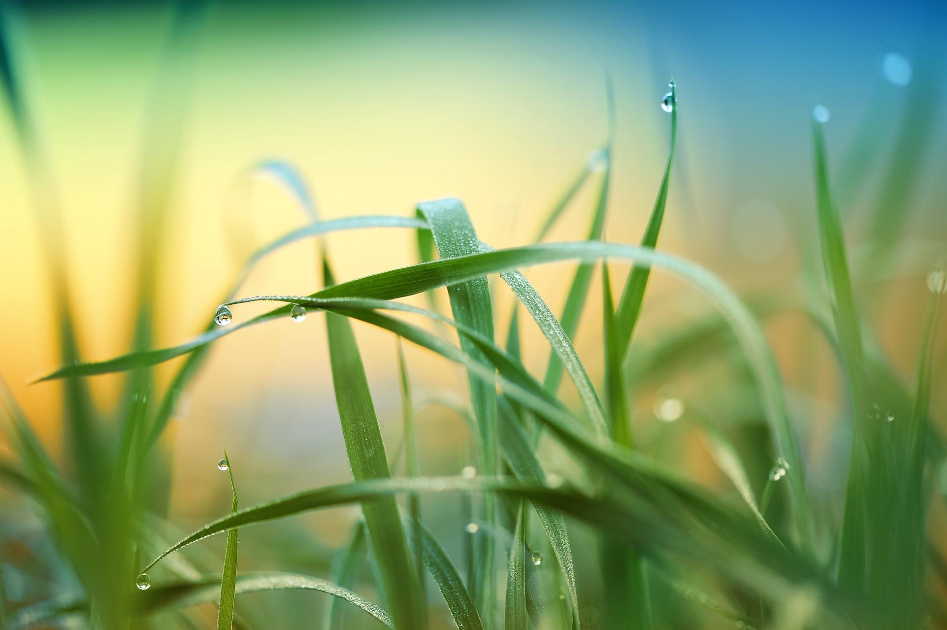 grass-3274686_1920